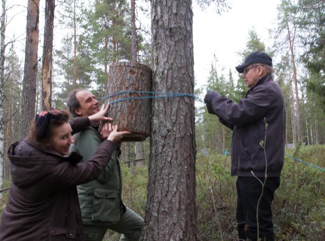 Viimeinen telkänpönttö löytää paikkansa Lapin Metsämuseon ja Lapin Lintutieteellisen yhdistyksen yhteistyönä.